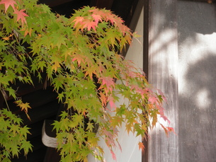 京都の紅葉の写真素材 [FYI00427841]