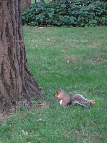 公園に佇むリスの写真素材 [FYI00428206]