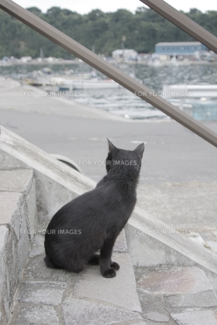 海辺の黒猫後ろ姿—田代島の写真素材 [FYI00428217]