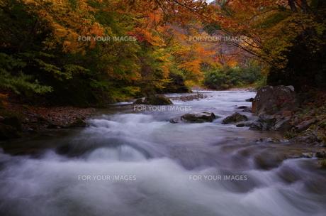 渓谷の紅葉—奥新川の写真素材 [FYI00428218]
