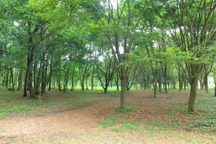 高崎自然の森の写真素材 [FYI00428274]