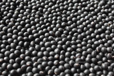 黒千石黒大豆の素材 [FYI00428427]