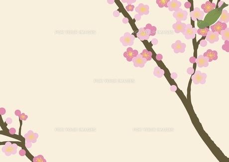 梅の花のフレームの写真素材 [FYI00428500]