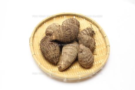 熊本県産里芋の写真素材 [FYI00428511]