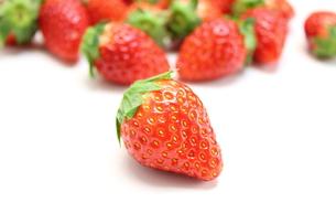 苺とちおとめの写真素材 [FYI00428606]
