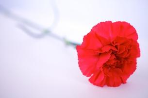 母の日の写真素材 [FYI00428857]