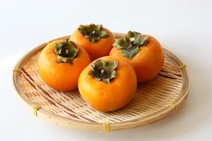 柿の写真素材 [FYI00428868]