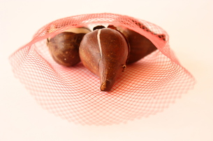 チューリップ球根の写真素材 [FYI00428877]