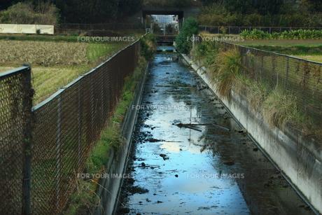 田んぼの間を流れる水路の写真素材 [FYI00428883]