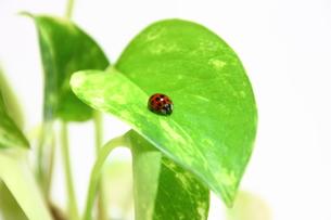 観葉植物にてんとう虫の写真素材 [FYI00428910]