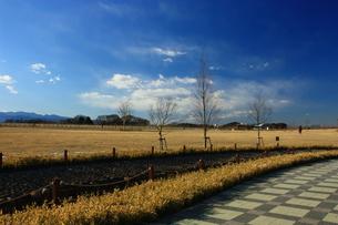 冬空の公園の写真素材 [FYI00428997]