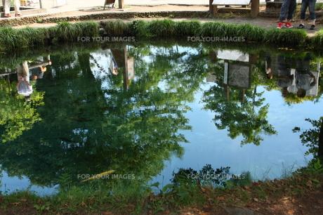 忍野八海の池の写真素材 [FYI00429005]