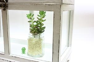 ガラスケースの中の多肉植物の写真素材 [FYI00429046]