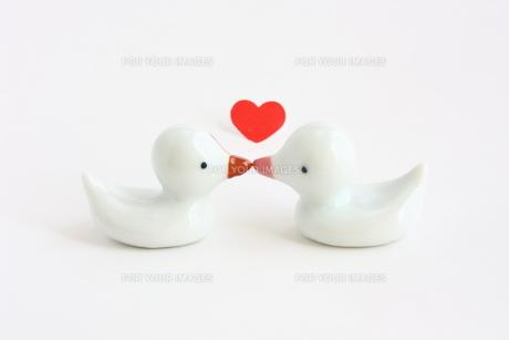 あひるのキスの写真素材 [FYI00429072]