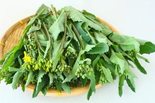 春野菜かき菜の写真素材 [FYI00429150]