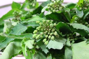 春野菜かき菜の写真素材 [FYI00429151]
