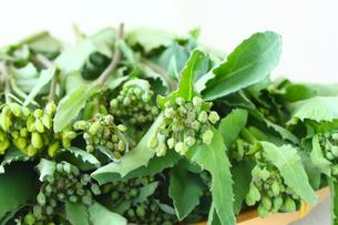 春野菜かき菜の写真素材 [FYI00429169]
