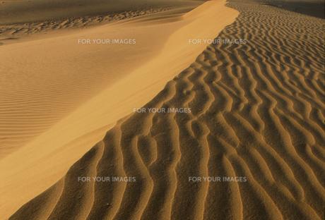 砂丘の風紋の写真素材 [FYI00429293]
