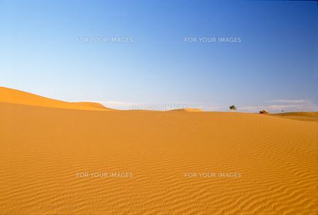 砂漠と青空の写真素材 [FYI00429335]