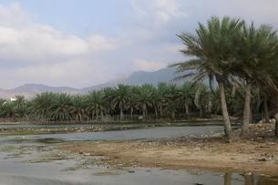ソコトラ島の風景の写真素材 [FYI00429346]
