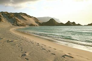 ソコトラ島カレンシアビーチの写真素材 [FYI00429356]