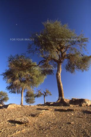 月と樹々と大地の写真素材 [FYI00429358]
