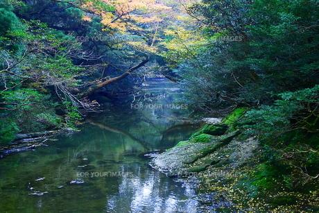 屋久島の風景の写真素材 [FYI00429368]