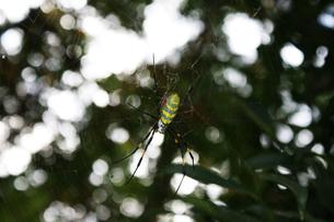 大きな蜘蛛と巣の写真素材 [FYI00429455]