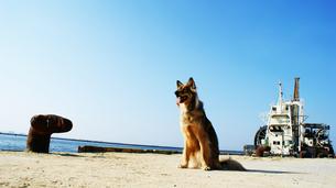 海岸でお座りする犬の素材 [FYI00429458]