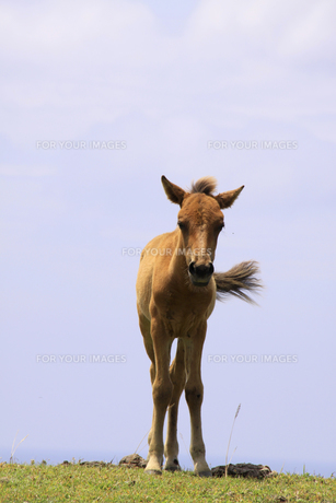 馬の写真素材 [FYI00429465]