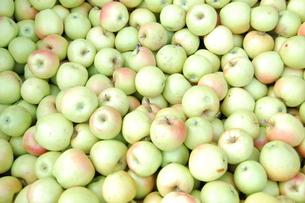 りんごの写真素材 [FYI00429551]