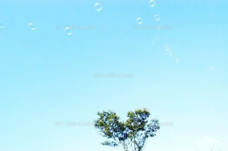 木の素材 [FYI00429555]