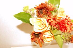 flowerの写真素材 [FYI00429575]