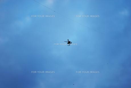 くもと雲の写真素材 [FYI00429596]