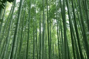 竹の道の写真素材 [FYI00429664]