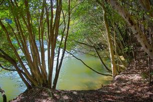 森の池の写真素材 [FYI00429696]