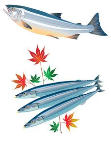 秋魚セット(シャケ、サンマ)の写真素材 [FYI00429741]