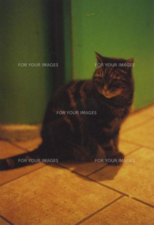 カラフルなパリの宿にいた子猫の素材 [FYI00429767]