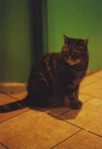 カラフルなパリの宿にいた子猫の写真素材 [FYI00429767]