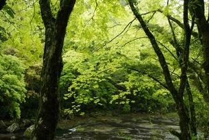 葉に注ぐ光の写真素材 [FYI00429896]