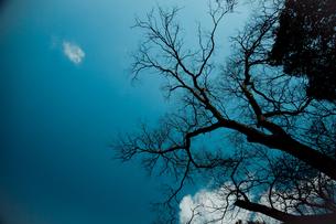 空に伸びる木の枝のシルエットの素材 [FYI00429914]