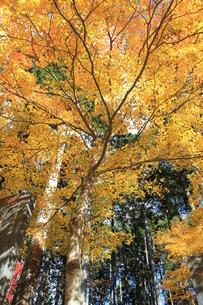 三峰の秋の写真素材 [FYI00429974]