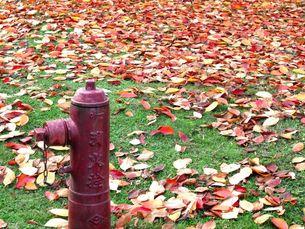 消火栓と落葉の写真素材 [FYI00430117]