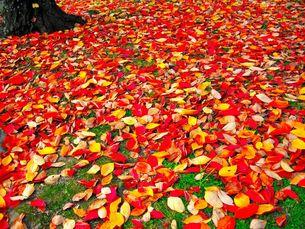落葉の素材 [FYI00430128]