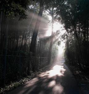 朝の風景の写真素材 [FYI00430141]