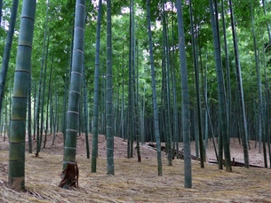 竹の写真素材 [FYI00430158]