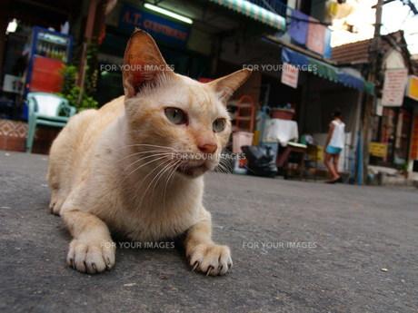 昼下がりのネコの写真素材 [FYI00430190]
