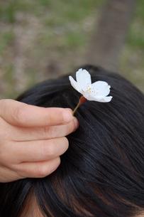 桜の花、見つけたの素材 [FYI00430209]