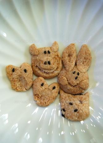 動物クッキーの写真素材 [FYI00430218]