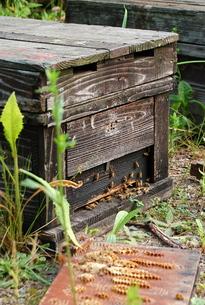 蜂の巣の写真素材 [FYI00430350]